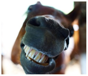 horse-teeth